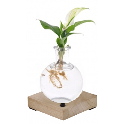 Miami - Spathiphyllum in glas + LED verlichting