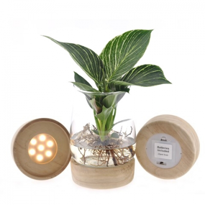 Tucson - Philodendron in glas met LED verlichting
